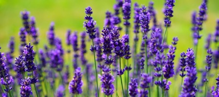 homeopathie sante